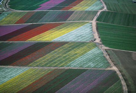 Alex Maclean, 'Cut Flower Fields, Oceanside, CA', 1989