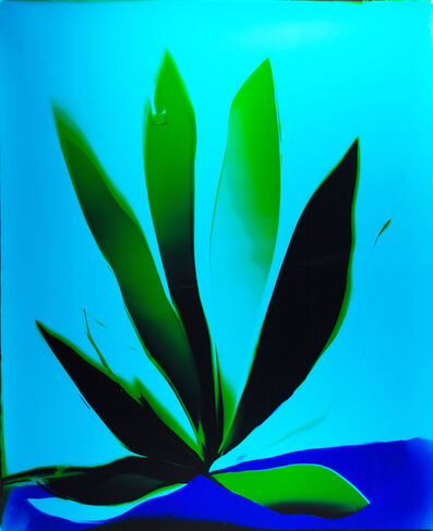Liz Nielsen, 'Cool Ocean Lotus', 2019