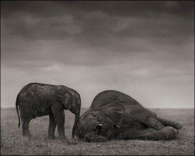 Nick Brandt, 'The Two Elephants, Amboseli, 2012', 2012