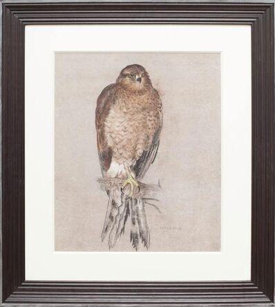 Camille Roche, 'Falcon'