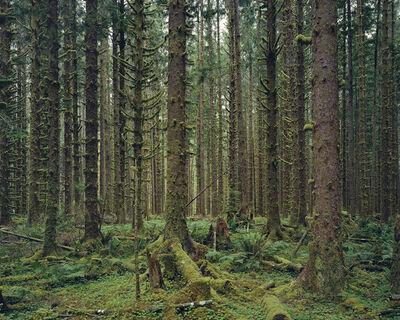 Mitch Epstein, 'Hoh Rain Forest, Olympic National Park, Washington 2017', 2017