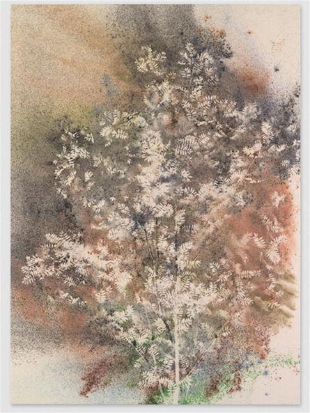 Sam Falls, 'Untitled (Sarvisalo, Finland, Sumac Tree 2)', 2014