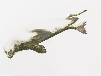 Alexis Rockman, 'Harbor Seal (Phoca vitulina)', 2014