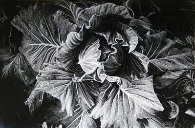 Daido Moriyama, 'Cabbage (No. 2812)', 1989