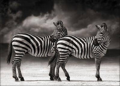 Nick Brandt, 'Portrait of two Zebras turning heads, Ngorongoro Crater', 2005
