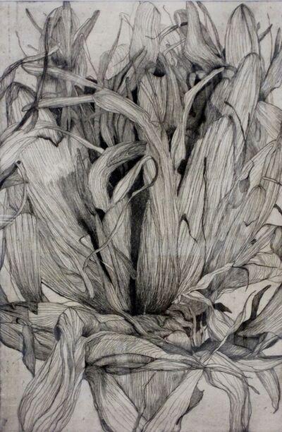 Tony Ameneiro, 'Large Location Series Detail Gymea Lily II ', 2004