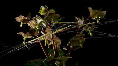 Quayola, 'Natures #2B', 2009
