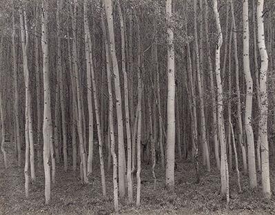 George Tice, 'Aspen Grove, Aspen, CO', 1969