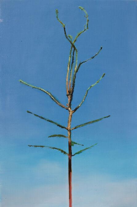 Greet Van Autgaerden, 'Picea abies #6'