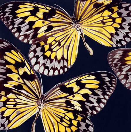 Donald Sultan, 'Monarchs, Jan 24, 2006', 2006