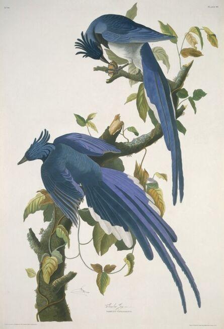 Robert Havell after John James Audubon, 'Columbia Jay', 1830