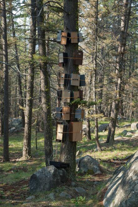 Rob MacInnis, 'Tree Surround', 2013