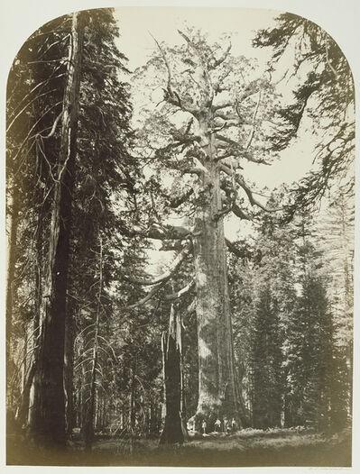Carleton E. Watkins, 'Grizzly Giant Mariposa Grove - 33 ft. Diam.', 1861