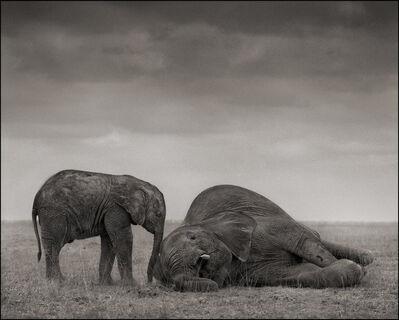 Nick Brandt, 'The Two Elephants, Amboseli', 2012