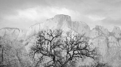 Brian Kosoff, 'Zion Tree', 2005