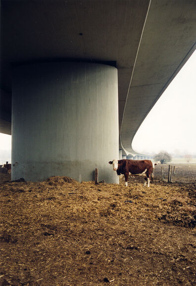 Jitka Hanzlová, 'Untitled (Bio Cow)', 1998