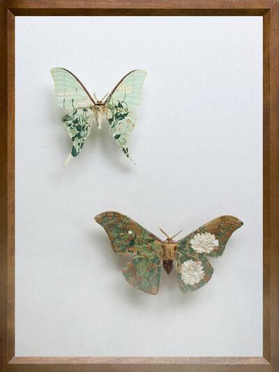 Akihiro Higuchi, 'Collection 0713', 2013