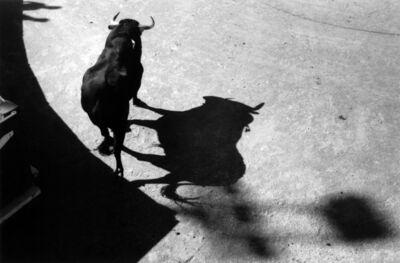 Lucien Clergue, 'Le taureau des ombres Arles', 2009