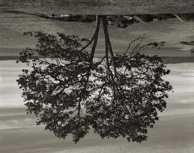 Rodney Graham, 'Gary Oak, Galiano Island', 2012