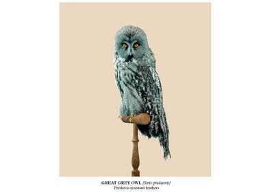 Vincent Fournier, 'Great Grey Owl [Strix predatoris]', 2015