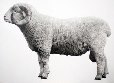 Jonathan Delafield Cook, 'Exmoor Horn Sheep', 2019