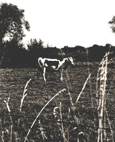 Vik Muniz, 'Two Cows', 1997