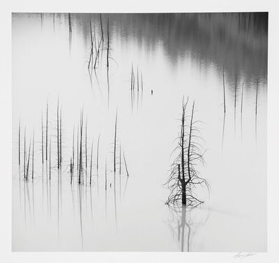 Ansel Adams, 'Trees, Slide Lake, Grand Teton National Park, Wyoming', 1965