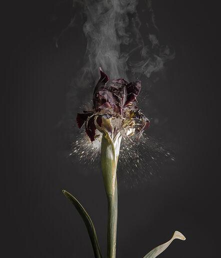 Ori Gersht, 'Iris Atropurpea D01', 2018