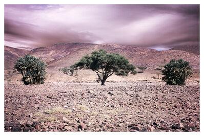 Bernhard Quade, 'Anti-Atlas Trees, Morocco', 2014
