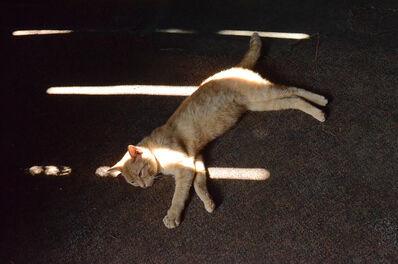 Nancy Friedland, 'Cat in Sun, from the series Constellations', 2015