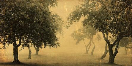 Joyce Tenneson, 'Hope Apple Trees'