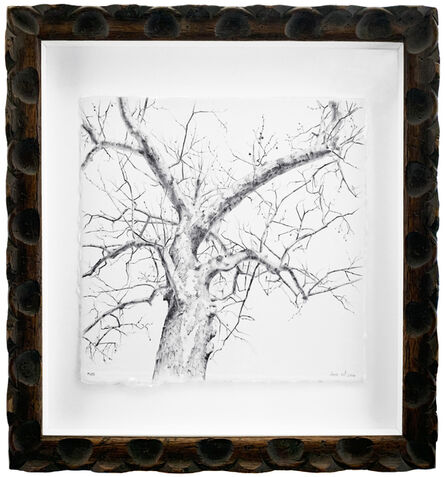 Dina Brodsky, 'Secret Life of Trees #105', 2016