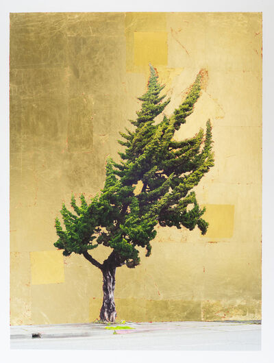 Daniel Ballesteros, 'Gold Leaf Tree No. 117', 2019
