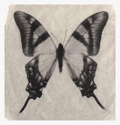 Gregor Törzs, 'Schmetterling No. 2', 2016