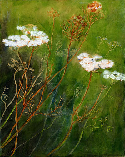 Michael Rawson, 'Queen Anne's Lace'