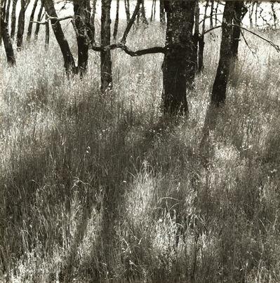 Ruth Bernhard, 'Trees Walking', 1972