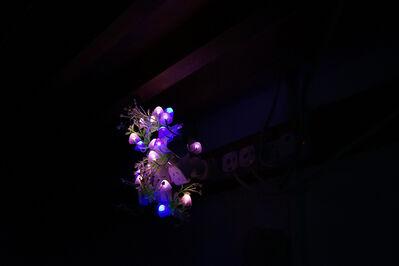 Trevor Yeung, 'Night Mushroom Colon (Seven)', 2017