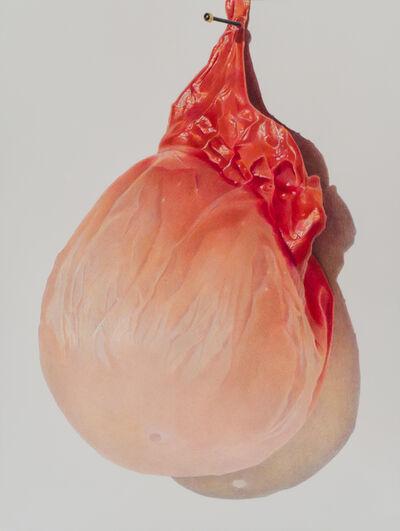Julia Randall, 'Pinned Apricot', 2013