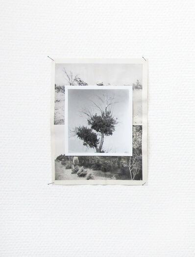 Risk Hazekamp, 'Reforestation 01', 2014
