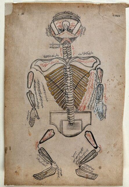 'Anatomical Illustration', 19th century