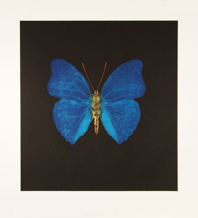 Damien Hirst, 'The Souls on Jacob's Ladder Take Their Flight (Blue/Yellow)', 2008