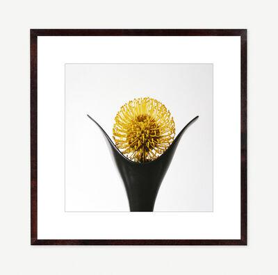 Vivienne Foley, 'Pincushion Protea in Black Tulip Vase', 2000