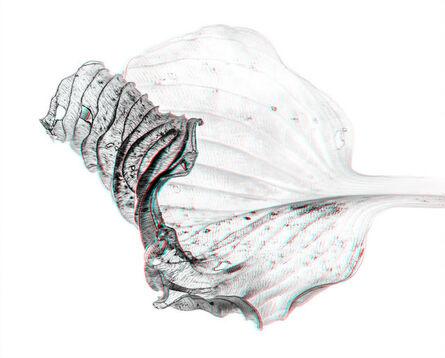Sebastian Cramer, 'Hosta Leaf', 2016