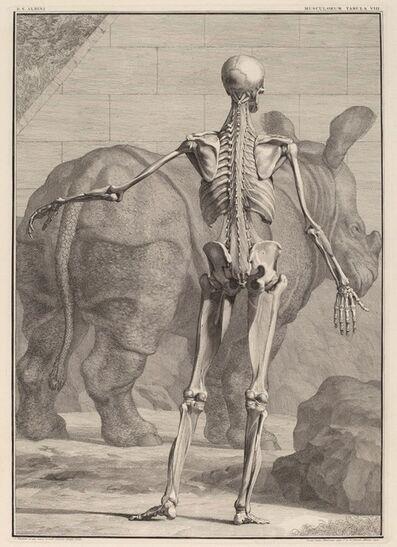 Jan Wandelaar, 'Musculorum Tabula VIII', 1742