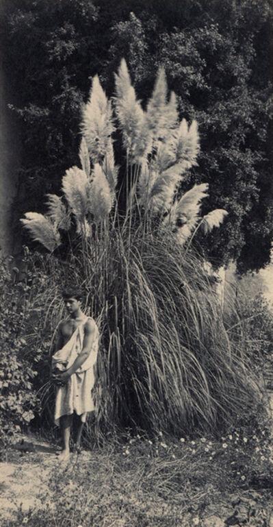 Wilhelm Von Gloeden, 'Untitled'