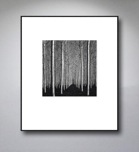 Michael Kenna, 'Spring Poplar Trees, Pavia, Italy. 2019', 2019