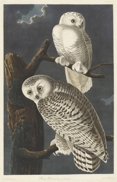Robert Havell after John James Audubon, 'Snowy Owl', 1831