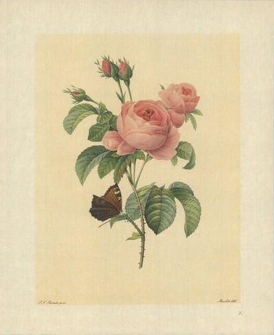 Pierre Joseph Redouté, 'Rosier a Cent Feuilles (Rosa Centifolia)', 1939