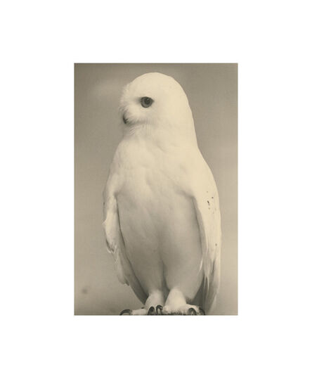 Yamamoto Masao, 'Birds Collotype portfolio', 2019