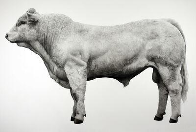 Jonathan Delafield Cook, 'Bull', 2019